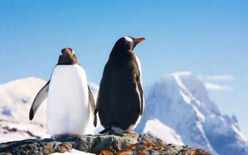 SEO対策をするうえで理解が欠かせないペンギンアップデートとは?