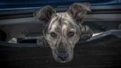 Photo of Az elmúlt időszakban több esetben találtak kutyakölyköket a Nemzeti Adó- és Vámhivatal (NAV) munkatársai