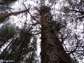 Bosque Bogotano a 3.300 metros
