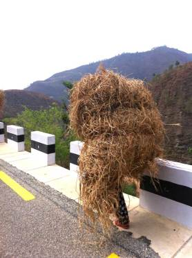 Woman carrying load for cattle