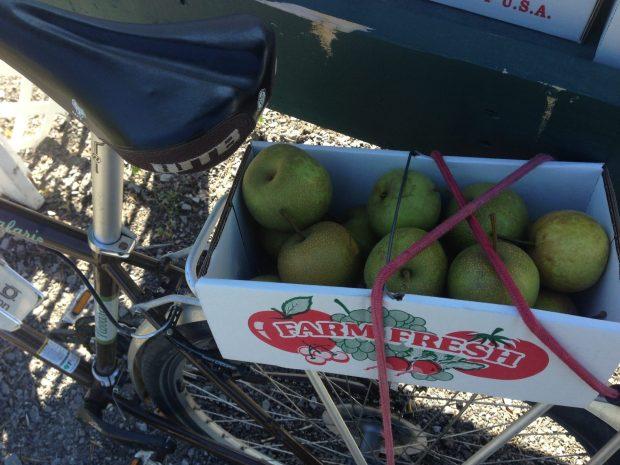 Lake Ontario apples by bike