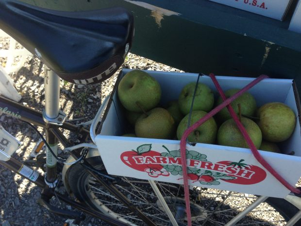 Lake Ontario apples by bike