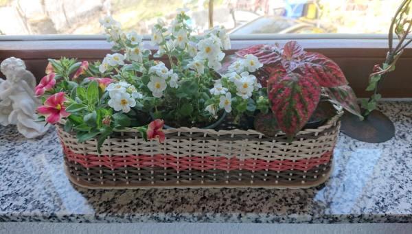Blumenkasten aus Peddigschiene mit Blumen