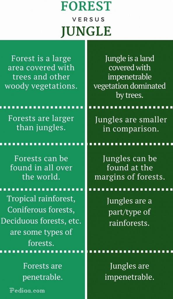 Image result for forest v jungle