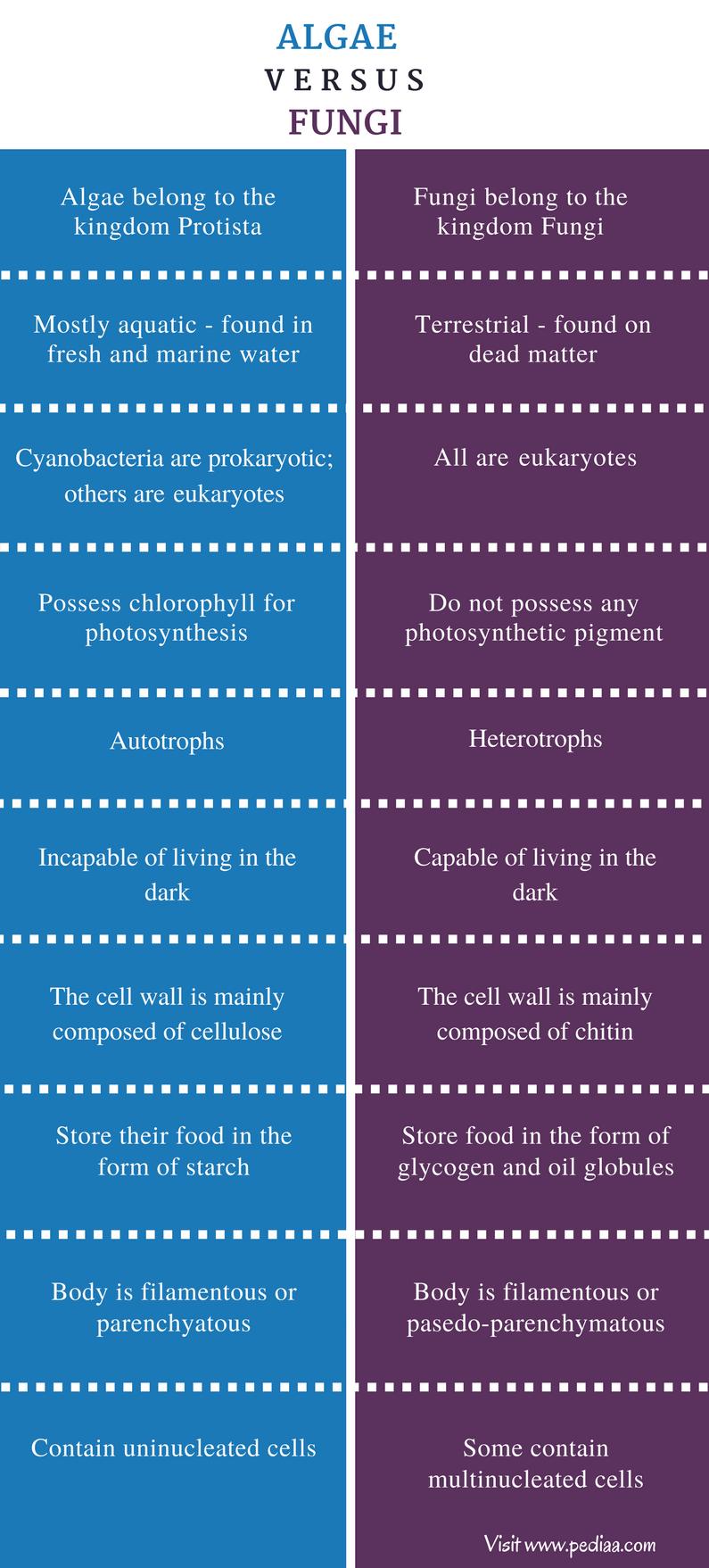 3 Main Types Protists