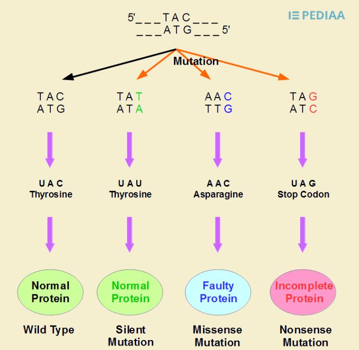 Frameshift Mutation Definition Chemistry | Frameswall.co