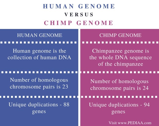 genetic difference between humans and chimps genetic difference between humans and apes dna difference between humans and chimps genetic similarity between humans and chimps dna difference between chimps and humans genome difference between human and chimpanzee genetic differences between humans and chimpanzees genetic similarity between humans and chimpanzees