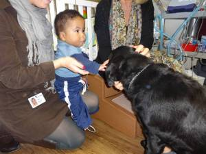Pt Pleasant Therapy Dog 009