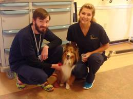 Therapy Dog July 2015 A