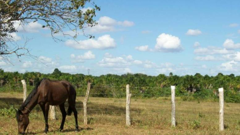 Anzoátegui es punta de lanza en producción agroalimentaria - Anzoátegui es punta de lanza en producción agroalimentaria