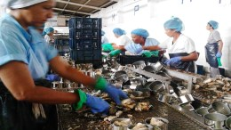 La Gaviota prevé producir 90.000 cajas de productos del mar - La Gaviota prevé producir 90.000 cajas de productos del mar