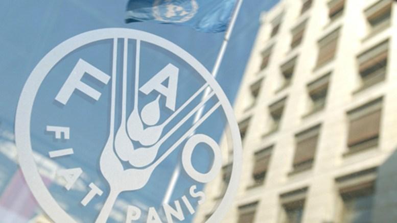 La escandalosa factura para importar alimentos - La escandalosa factura para importar alimentos FAO