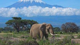 La astronómica cifra que provee el turismo a África - La astronómica cifra que provee el turismo a África