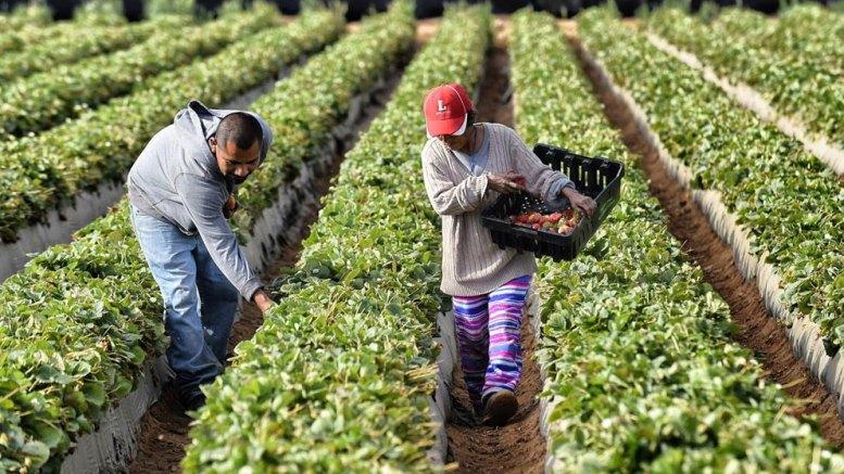 El Plan de EEUU para los agricultores ante una salida del TLCAN - El Plan de EEUU para los agricultores ante una salida del TLCAN
