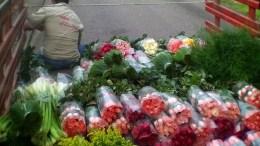 Venezuela iniciará exportación de flores - Venezuela iniciará exportación de flores