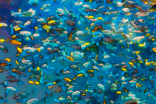 fish pictures to colour