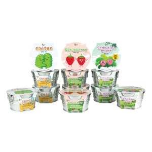 BUZZY Kids Mini Basin Seed Grow Kit