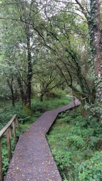 Boarded walkway at Greenan Farm