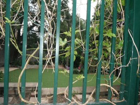 SAFE AND GREEN CHILDCARE CENTRE