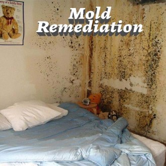 Mold Remediation, Mold Inspection, Mold Removal