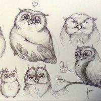 Eulen Skizzen | Owl Sketches