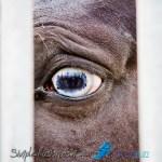 Des yeux expressifs, derrière des barreaux... De la curiosité, rassurez-vous !