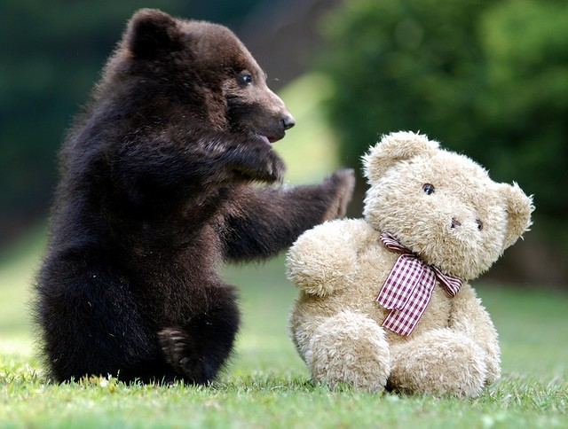 www.pegasebuzz.com | Bear and Teddy Bear