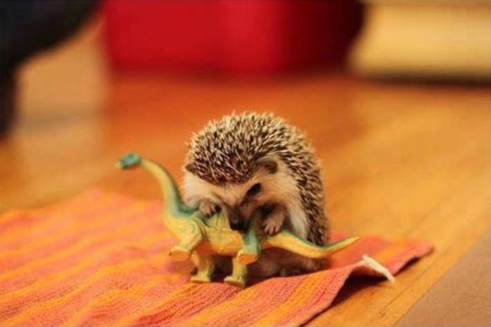 www.pegasebuzz.com | Hedgehog and toy