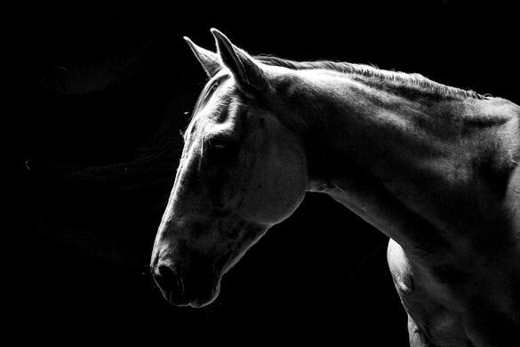 www.pegasebuzz.com | Equestrian Photography : Nick Aldridge