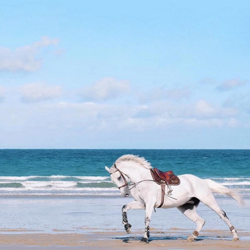 www.pegasebuzz.com | Muetc sur Instagram : chevaux en Bretagne