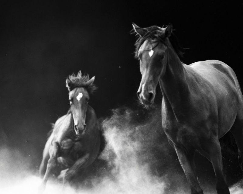 www.pegasebuzz.com   Equestrian photography : Neil Latham - American Thoroughbred