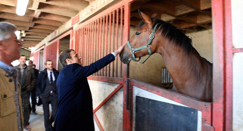 www.pegasebuzz.com | Le président Emmanuel Macron offre un cheval de la Garde Républicaine à la Chine : Vésuve de Brekka.