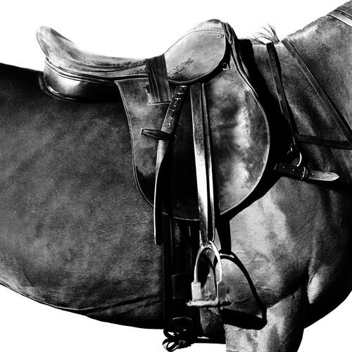 www.pegasebuzz.com | Equestrian photography : Irina Kazaridi - Polo Ponies.