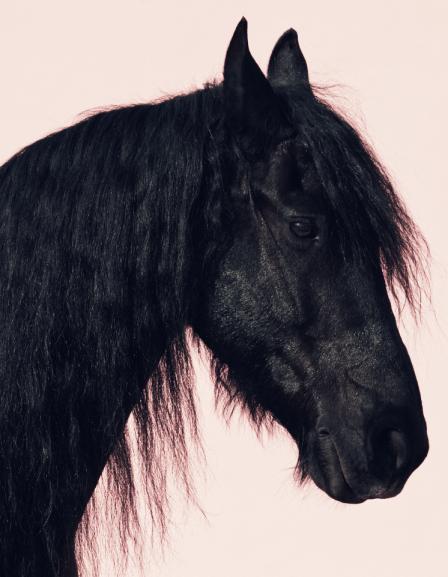 www.pegasebuzz.com   Ronja Furrer by Sven Bänziger for Bolero Magazine, july 2015.