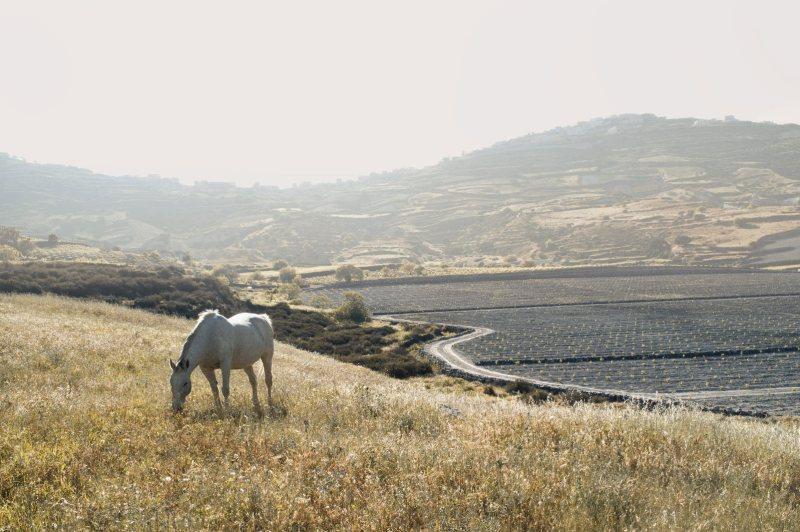 www.pegasebuzz.com | Equestrian photography : Petros Koublis.