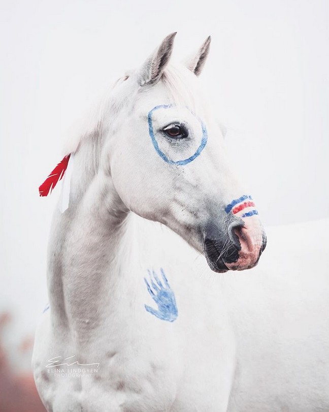www.pegasebuzz.com | Equestrian photography : Elina Lindgren.