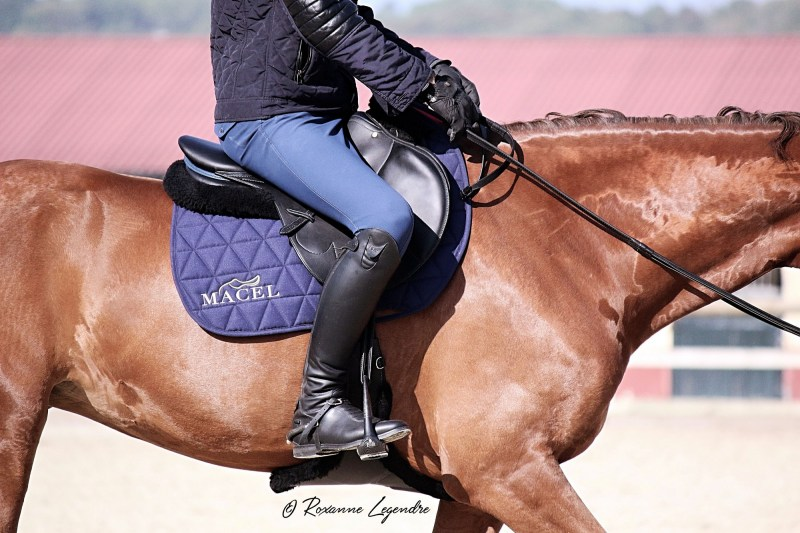 www.pegasebuzz.com | Equipement du cheval : étrier Carbon Flex Royal Rider Stirrups.