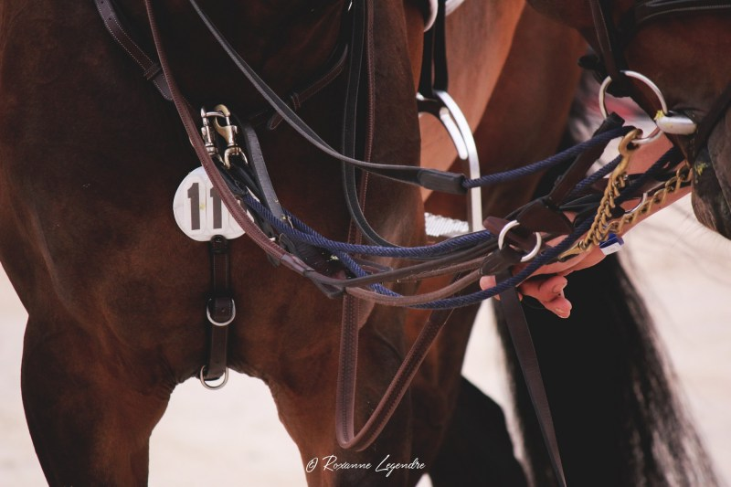 www.pegasebuzz.com | Athina Onassis Horse Show 2016 - LGCT Saint-Tropez.