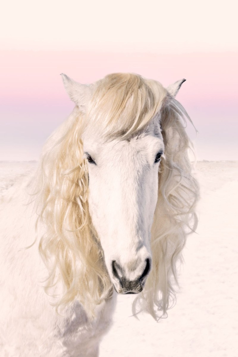www.pegasebuzz.com | Equestrian photography : Gray Malin - Icelandic Horses.