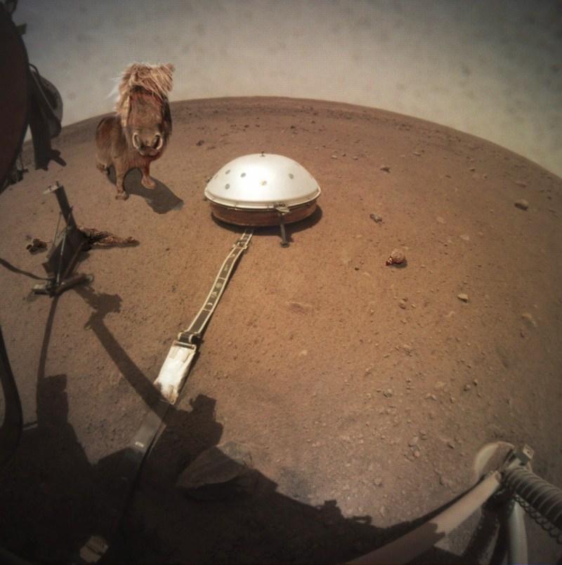 www.pegasbuzz.com | Un cheval aperçu sur le planète mars.