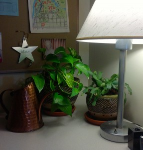 officeplants