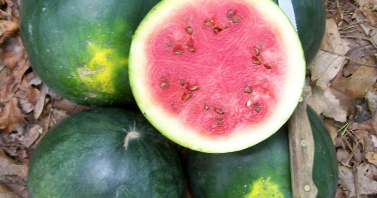Watermelons and station wagons