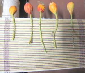 Rose Hip Weaving