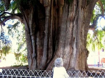 9.1 big tree with grey hair woman