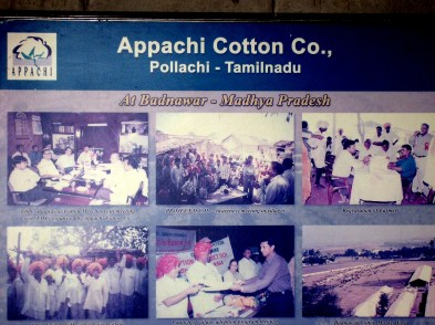 17.8 sign Appachi Cotton