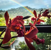 Orchid and Rainbow