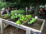 salad table in demonstration garden