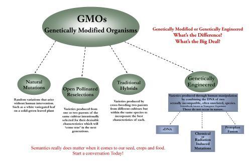 GE Free Semantics