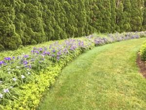 ladew hedge