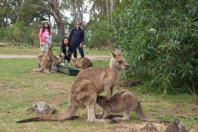 And lastly, Australia!